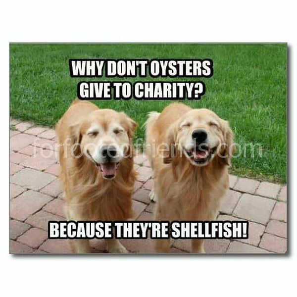 50+ lustigste Golden Retriever Meme - Doggypedia